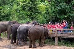 NIS-Summer-School-2019-Day-11-Maetaman-Elephant-Camp-16