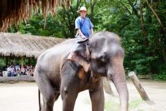 NIS-Summer-School-2019-Day-11-Maetaman-Elephant-Camp-18