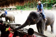 NIS-Summer-School-2019-Day-11-Maetaman-Elephant-Camp-20