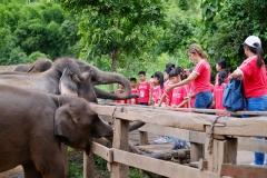 NIS-Summer-School-2019-Day-11-Maetaman-Elephant-Camp-25
