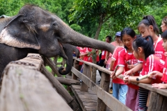 NIS-Summer-School-2019-Day-11-Maetaman-Elephant-Camp-37