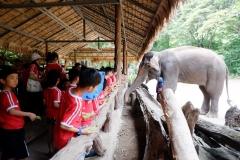 NIS-Summer-School-2019-Day-11-Maetaman-Elephant-Camp-39