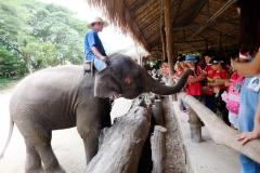 NIS-Summer-School-2019-Day-11-Maetaman-Elephant-Camp-45