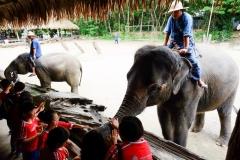 NIS-Summer-School-2019-Day-11-Maetaman-Elephant-Camp-46