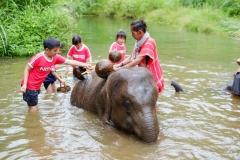 NIS-Summer-School-2019-Day-11-Maetaman-Elephant-Camp-48