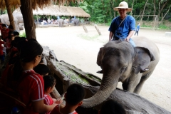 NIS-Summer-School-2019-Day-11-Maetaman-Elephant-Camp-49