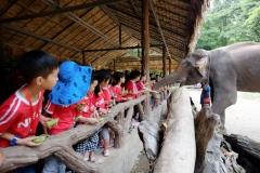 NIS-Summer-School-2019-Day-11-Maetaman-Elephant-Camp-51