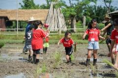 NIS-Summer-School-2019-Day-19-Ginger-Farm-15