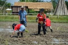 NIS-Summer-School-2019-Day-19-Ginger-Farm-24