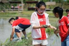 NIS-Summer-School-2019-Day-19-Ginger-Farm-46