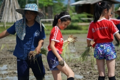 NIS-Summer-School-2019-Day-19-Ginger-Farm-5