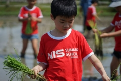 NIS-Summer-School-2019-Day-19-Ginger-Farm-8