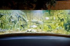 NIS-Summer-School-2019-Day-9-Aquarium-Chiang-Mai-Zoo-23
