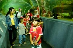 NIS-Summer-School-2019-Day-9-Aquarium-Chiang-Mai-Zoo-3