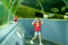 NIS-Summer-School-2019-Day-9-Aquarium-Chiang-Mai-Zoo-7