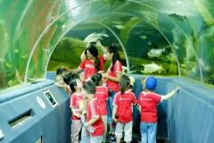 NIS-Summer-School-2019-Day-9-Aquarium-Chiang-Mai-Zoo-9