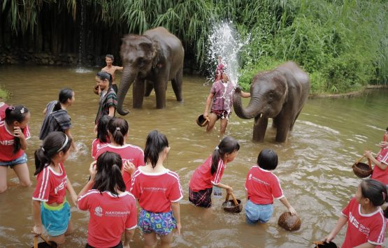 NIS Summer School 2019-Day 12-Maetamaan Elephant Camp-38
